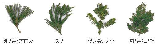 針葉樹(以外は広葉樹)
