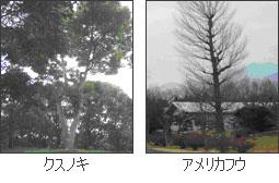 幹立ちの樹木(高木)
