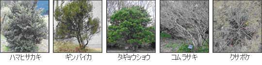 株立ちの樹木(低木)