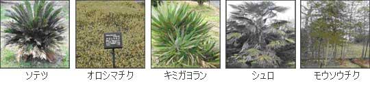 単子葉植物