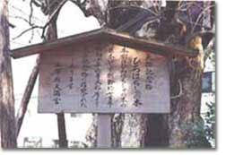 ヒロハチシャノキ 立札
