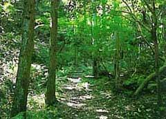 四王寺県民の森3