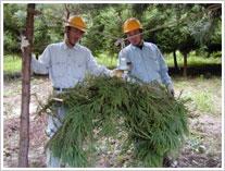 樹木炭素貯留量の調査