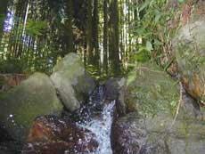 渓流水へ出てきた水