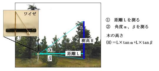 距離と角度による樹高測定