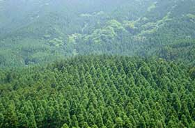 森林施業計画