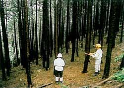 木の直径を測る