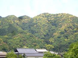 常緑広葉樹の春の森